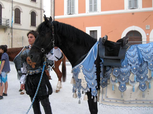 giotti-horse-in-splendid-blue-and-white-livery