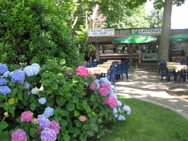 hydrangeas-of-all-colors-in-front-of-cafe-gelateria-pizzeria