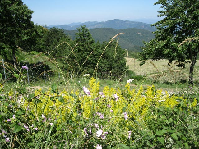 mugello-wildflowers