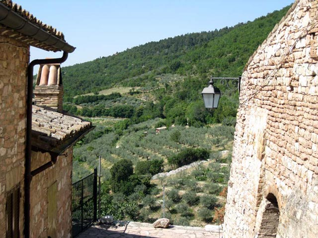 olive-grove-vista-from-collepino