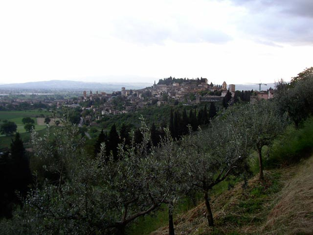spello-view-with-olive-trees