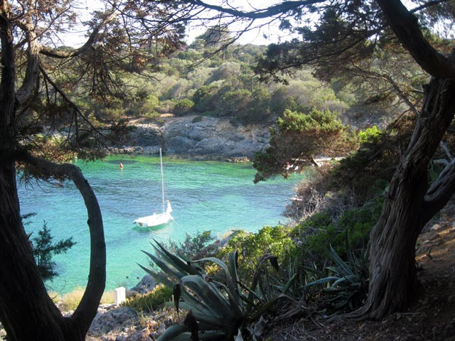 Mediterranean-pines-border-the-cove