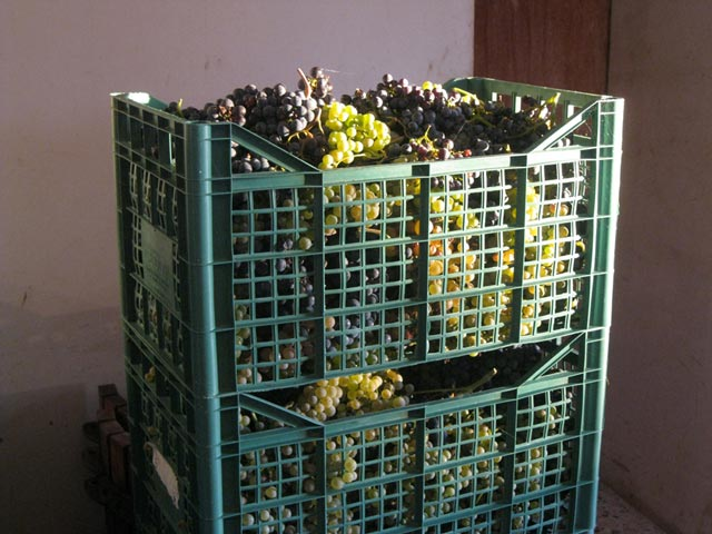 Grapes-in-crates-ready-for-pressing