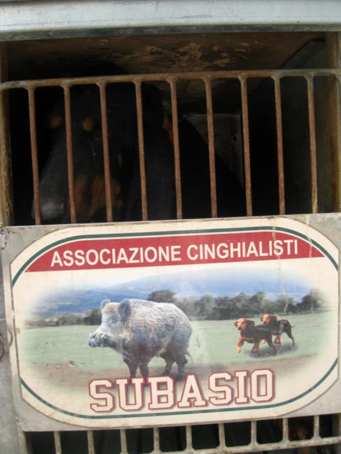 Cinghiale-groups-have-their-own-graphics-for-the-cages-of-the-dogs