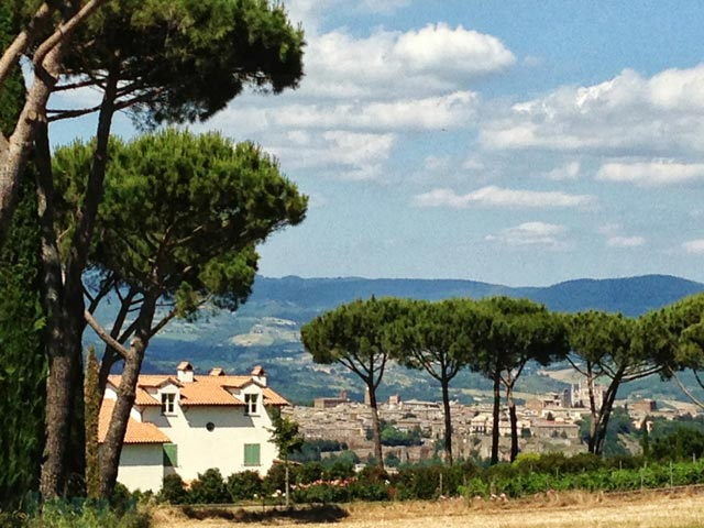 Mediterranean-pines-outline-this-Orvieto-view