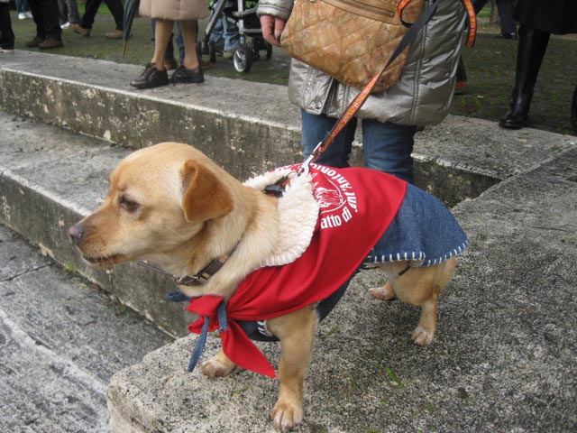 Ready-for-a-blessing-in-his-red-kerchief