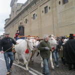 Two huge oxen bear S. Antonio in procession