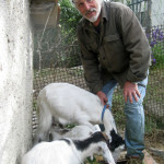 Pino with his goats, last year