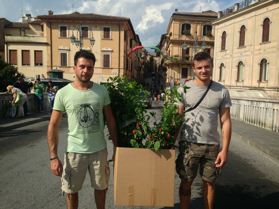 Back from the festival with a peperoncino plant