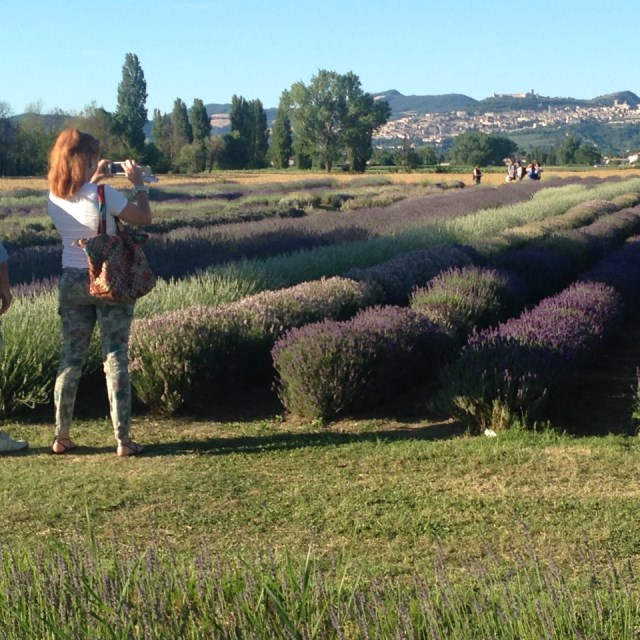 Visitors capture the magic of Assisi on the hill above lavender fields