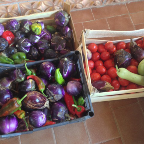 Crates of eggplants, peppers, zucchini, tomatoes:  fruit of the labors of Nino and his zii
