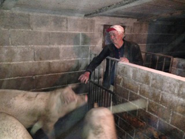 Peppe, proud of his pigs