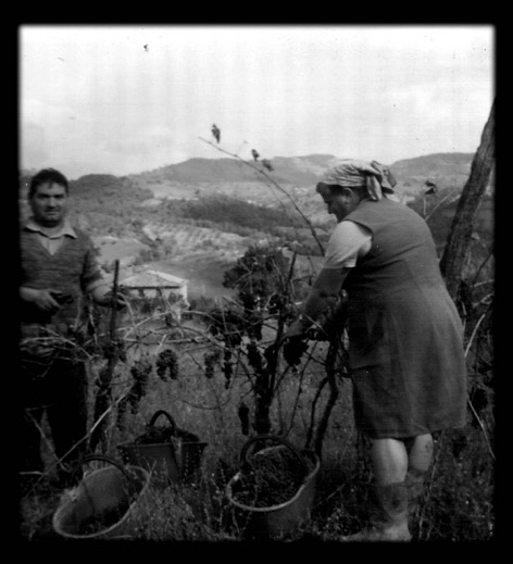 Picking our grapes with Peppe and Mandina, our farmhouse below (1975)