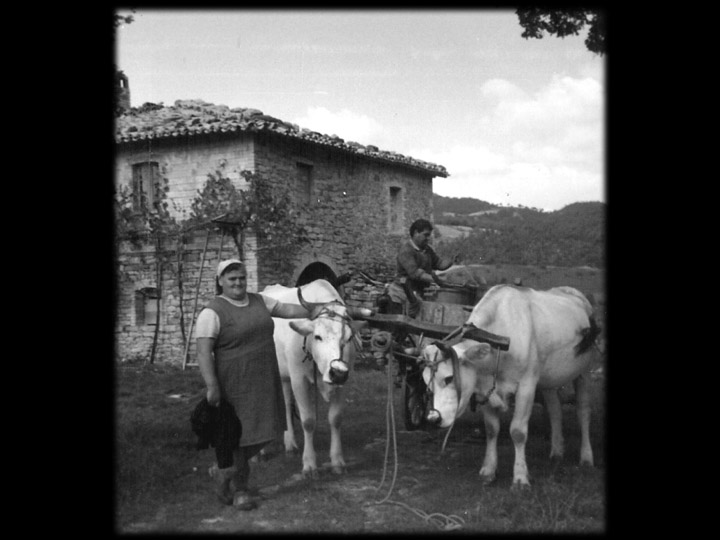 Peppe and Mandina brought the wine barrels to our farmhouse in their oxen-pulled cart