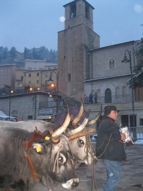 Peppe plays his organetto as he leads his oxen