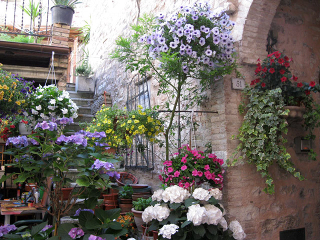 spello-flowers