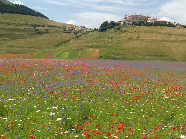 Blues and reds merge below Castelluccio