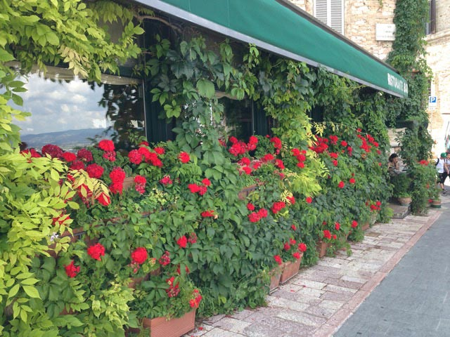 RESTAURANT-SF-WITH-GERANIUMS