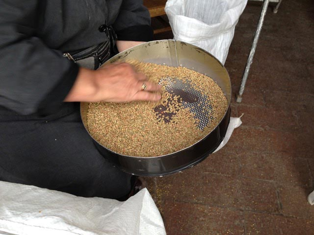 Cleaning-the-lentils