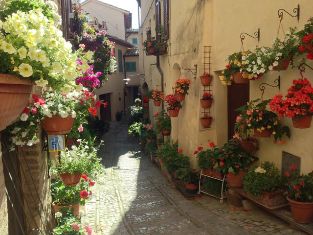 FLOWERING-ALLEYWAYS