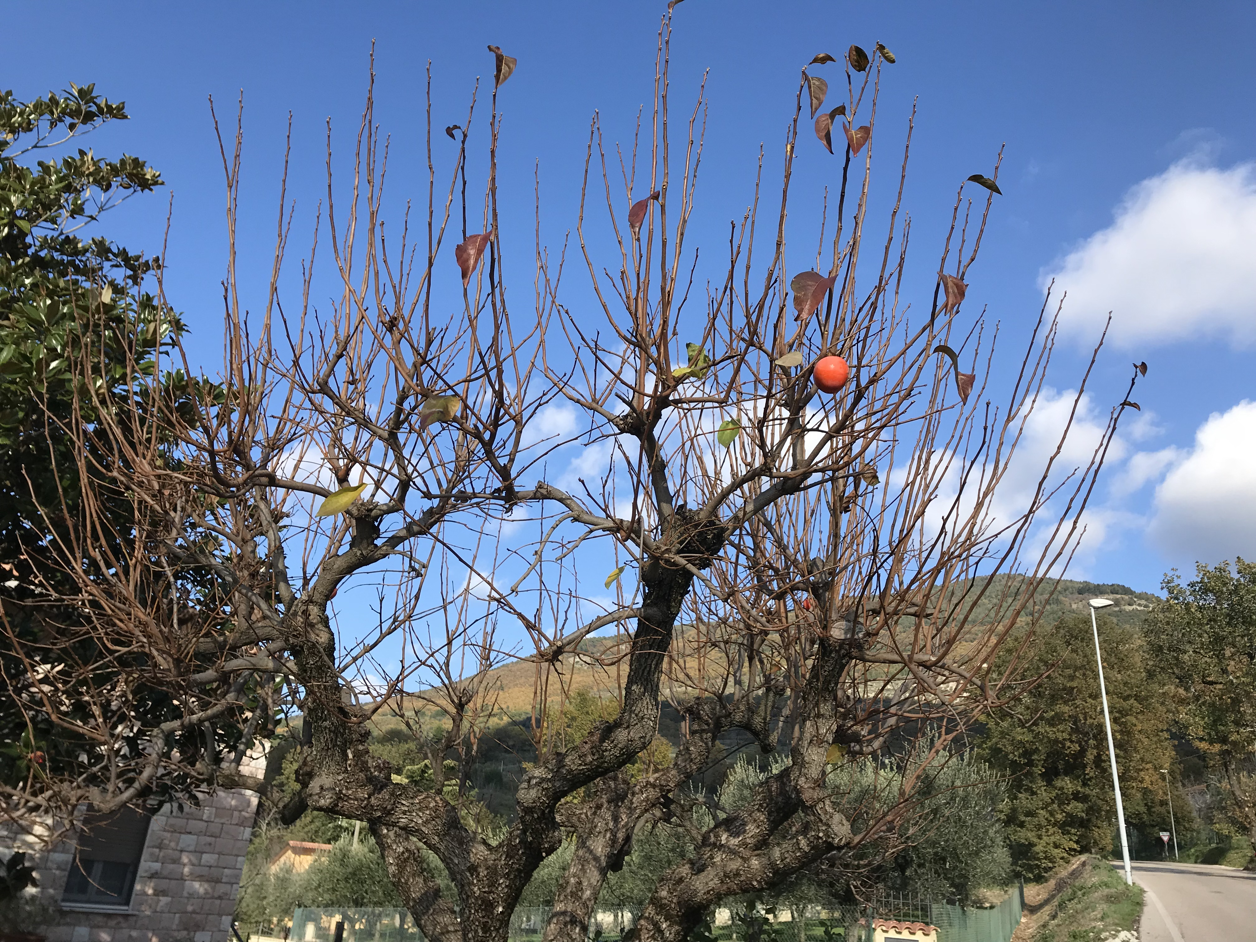 In Assisi The Glory Of Nando S Persimmons Annesitaly