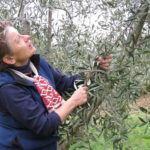 Virtual Experiences in Italy Olive Oil