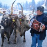 Touring Norcia, Cascia and Valnerina Oxen